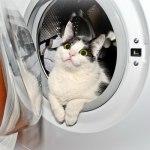 Как выбрать стиральную машину – автомат?