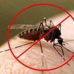 Это страшно надоедливое жужжание: как защититься от комаров?