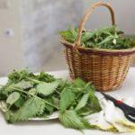 Витамины под ногами: вкусные блюда из крапивы